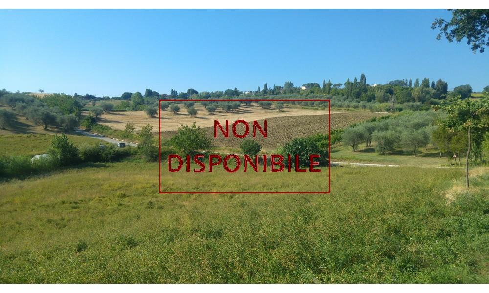 terreno-agricolo-verucchio-agenzia-vendita-edifica-panorama-venduto