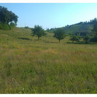 Terreno agricolo a Verucchio