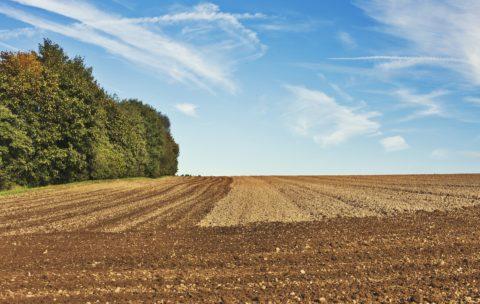 Terreni in vendita