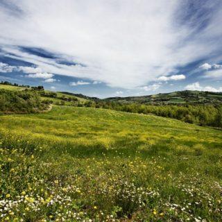 Terreno edificabile ed agricolo a Verucchio